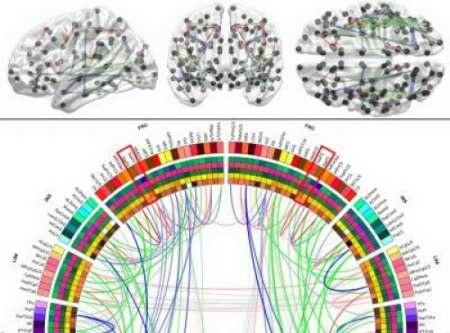 برای نخستین بار در جهان: نقشهبرداری از تمام اتصالات ماده سفید مغز