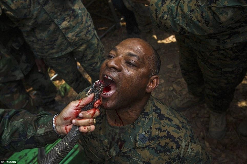 تصاویری از تمرین زنده ماندن با خوردن خون مار کبری و کندن سر مرغ زنده با دهان