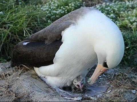 پیرترین پرنده جهان در 63 سالگی مادر شد!