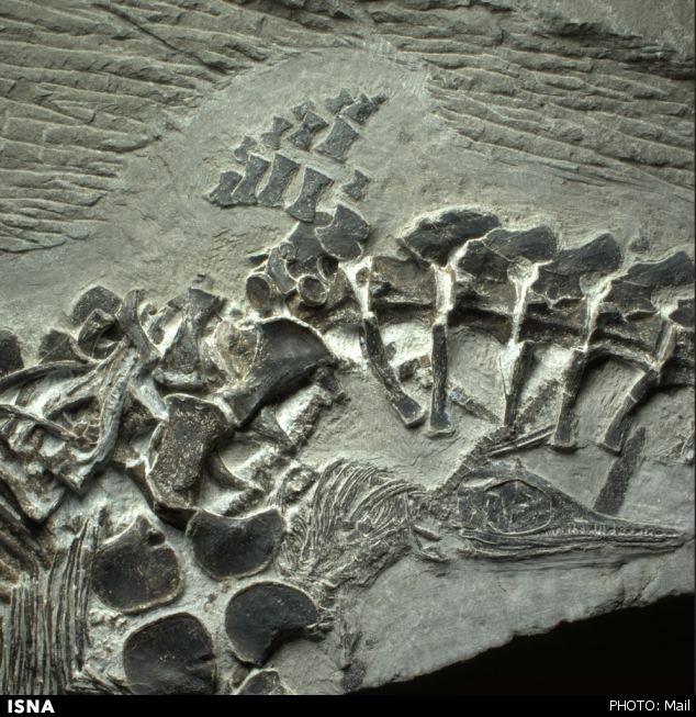 کشف شواهد قدیمیترین زایمان مرگبار در 248,000,000 سال پیش