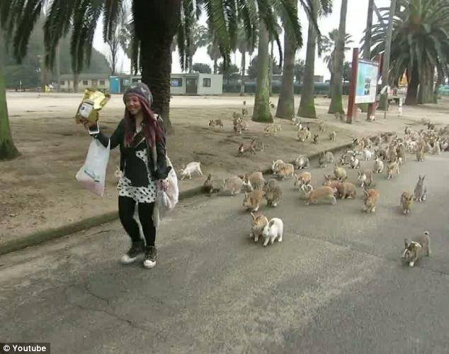 تصاویری از جزیره خرگوشها در ژاپن
