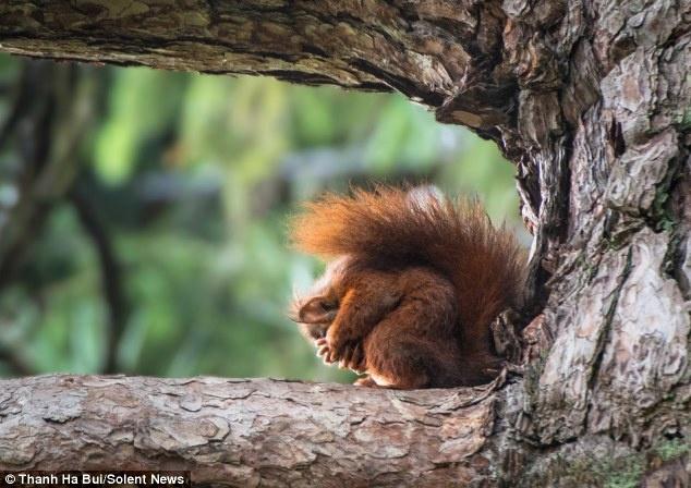 تصاویر سنجابی که یوگا بلد است