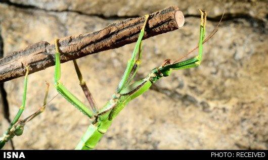 راز چسبندگی حشرات کشف شد