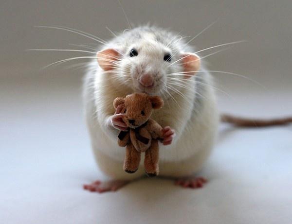 پربینندهترین تصاویر علمی هفته: از آبمروارید ستارهای تا اسباببازی موش خانگی