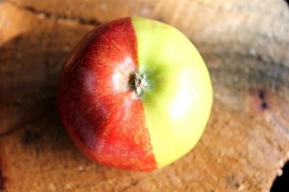 از نخستین تصویر سیب ممنوعه تا متفاوتترین چشمانداز روی زمین