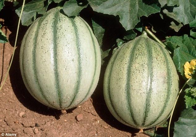 سیب 1.2 کیلویی که تماشا می کنید،قیمتش 3 میلیون و 320 هزار تومان است