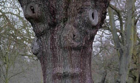 درختی که شبیه پت پستچی است!