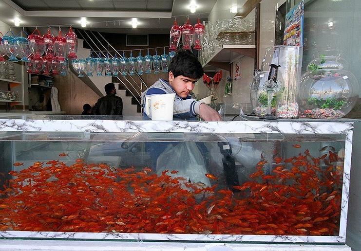 باز هم عید ، باز هم ماهی قرمز