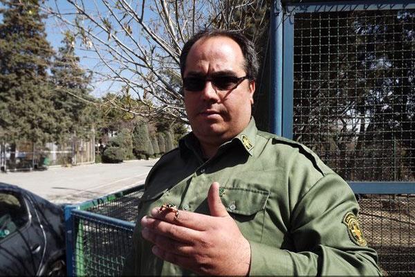 کشف 300 سمندر لرستانی و لاک پشت در تهران