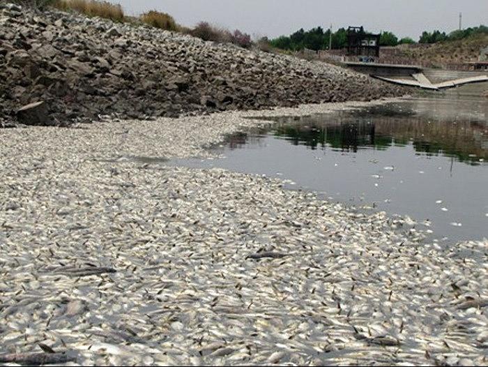 مرگ 2 میلیون ماهی بیخ گوش تهران، در سد فشافویه
