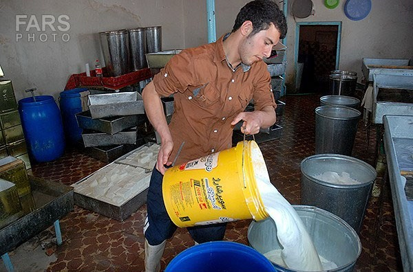 نحوه تولید پنیر سنتی / پنیر تبریز در کجا تولید می شود؟