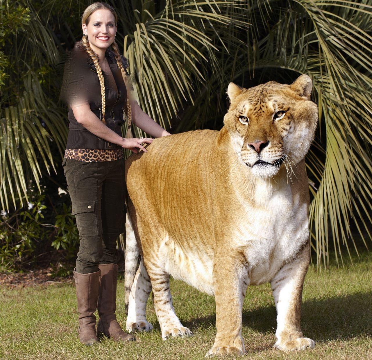 بزرگترین گربهسان جهان