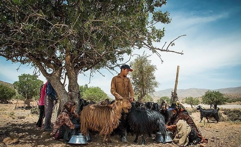 زندگی با عشایر استان فارس در دل طبیعت