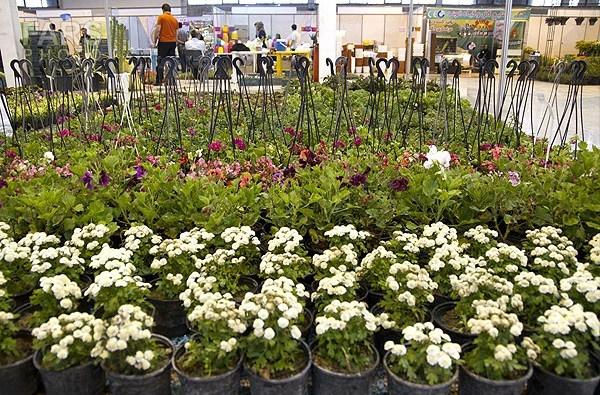نمایشگاه گل و گیاه در اراک