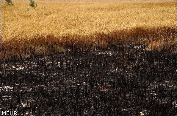هامون خشک شد، در آتش هم سوخت
