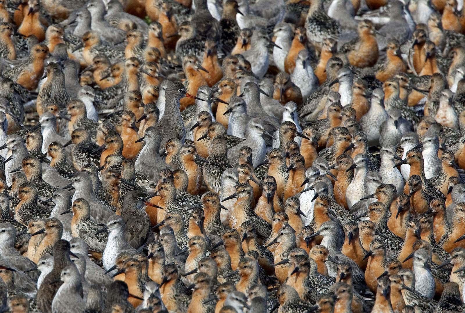 تصاویر حیرتانگیز از اجتماع حیوانات