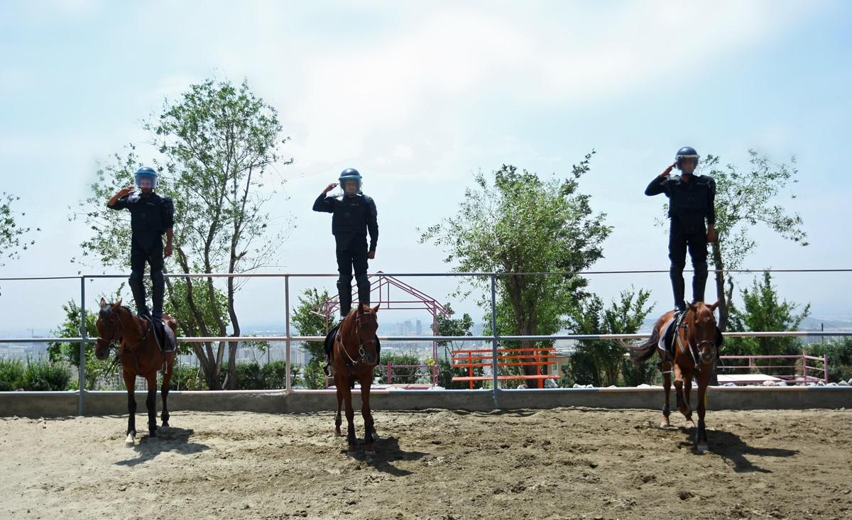 این یگان اسبواران و سپکا پلیس است