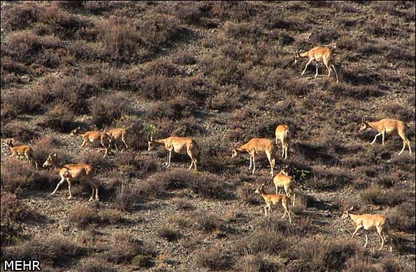 حیوانات پارک ملی گلستان، البته پیش از آتش سوزی
