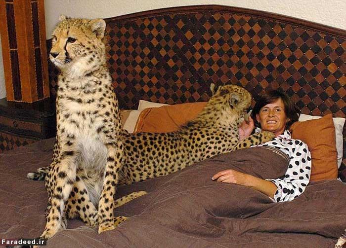 وقتی یک یوزپلنگ زنی را از سرطان نجات داد