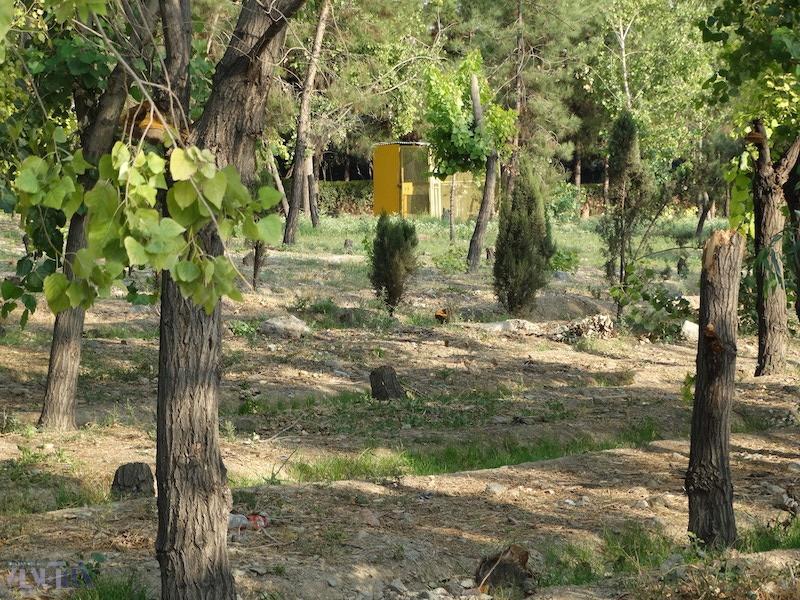 درختهای ترمینال غرب یکی یکی غیب می شوند، البته مدیریت شده/ این تصاویر را ببینید