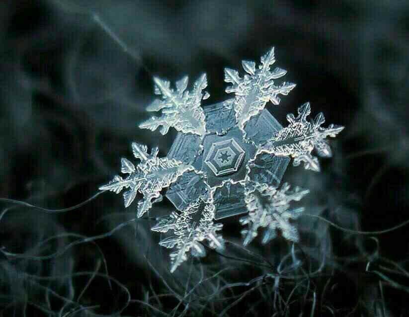 دانههای برف از نزدیک چه شکلی است؟