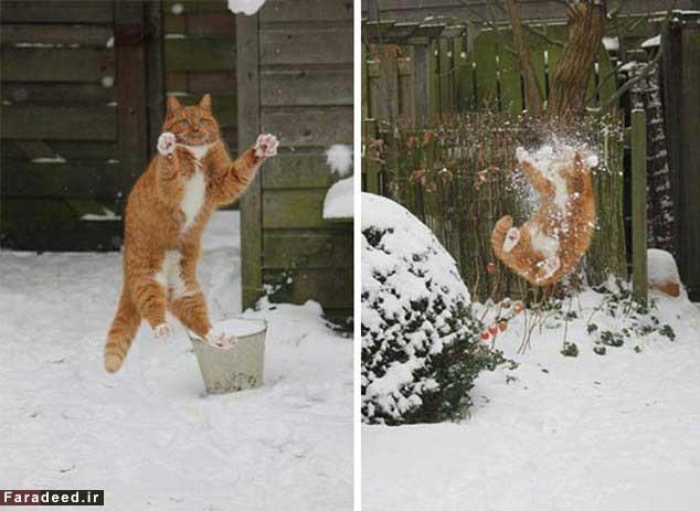 این گربهها از کرده خود شدیدا پشیمانند!