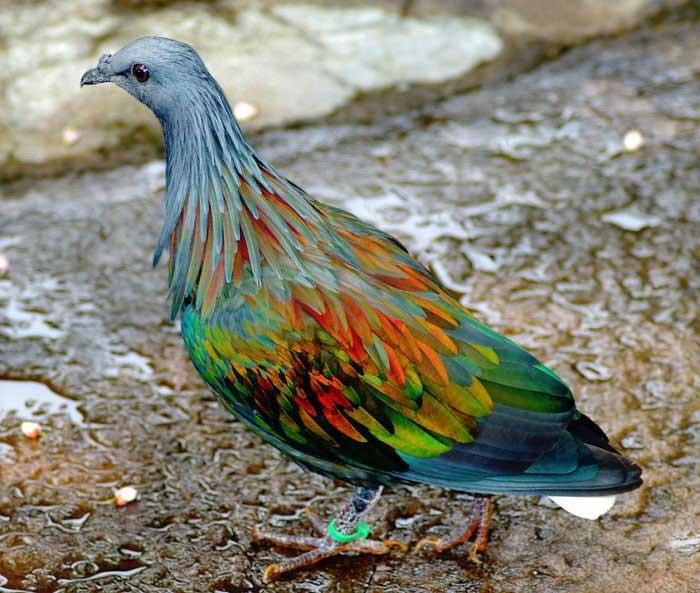 حیواناتی با رنگهای باورنکردنی