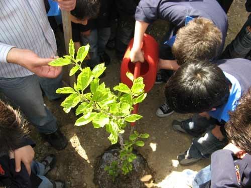 وعده آموزش و پرورش در مورد مدارس محیط زیستی عملی نشد/ آموزش 18 هزار معلم برای فعالیت در مدارس «جم»