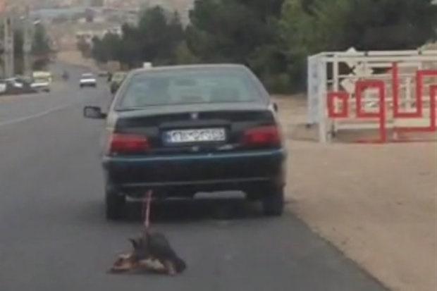 تکرار حیوانآزاری این بار در تهران/ سگی زنده را به طناب بستند و با پژو پارس روی زمین کشیدند
