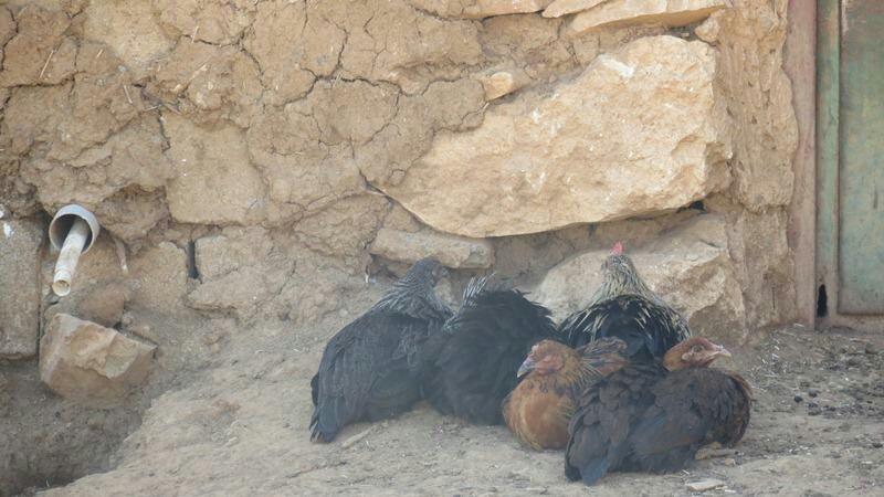 زیبایی های کمتر دیده شده استان کردستان