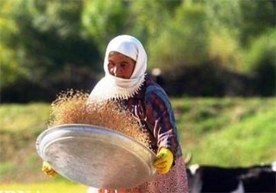 الزام آموزش به زنان روستایی در برنامه ششم توسعه / چندمیلیون زن روستایی در کشور داریم؟