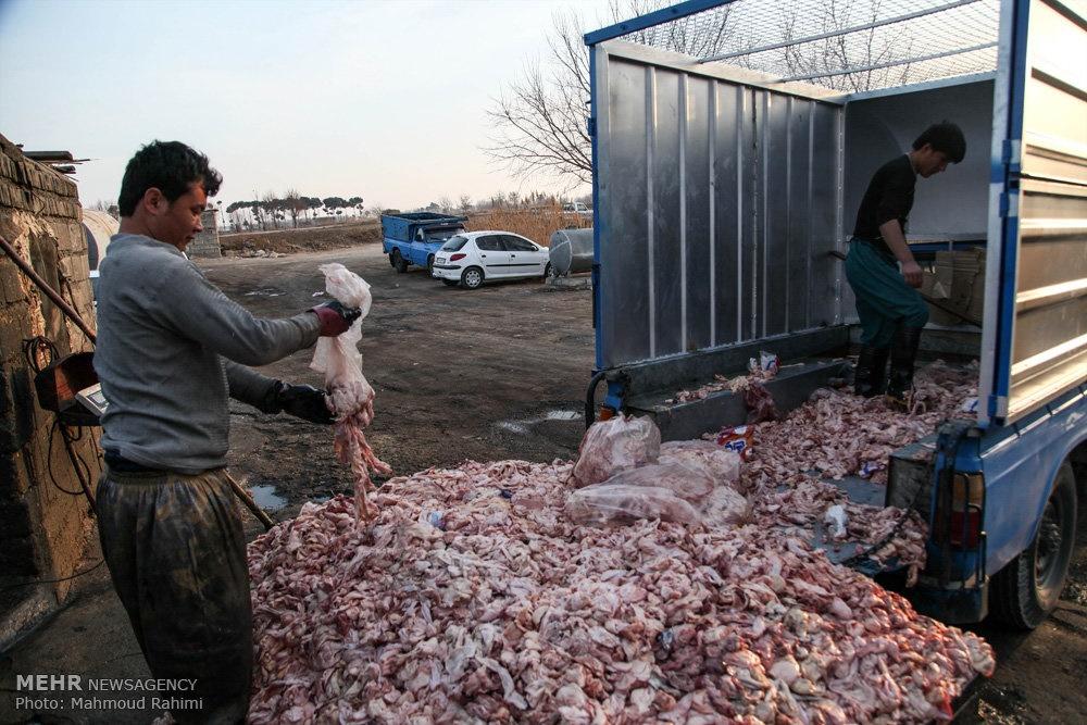 فروش ضایعات مرغ - 24