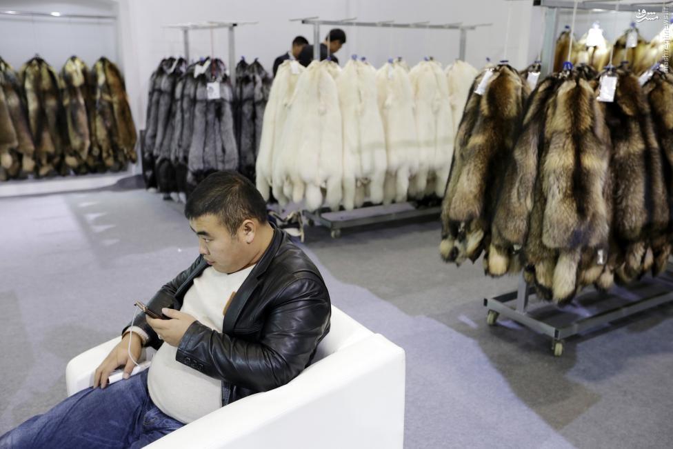 تجارت خشن چینیها/ فروش پوست روباه