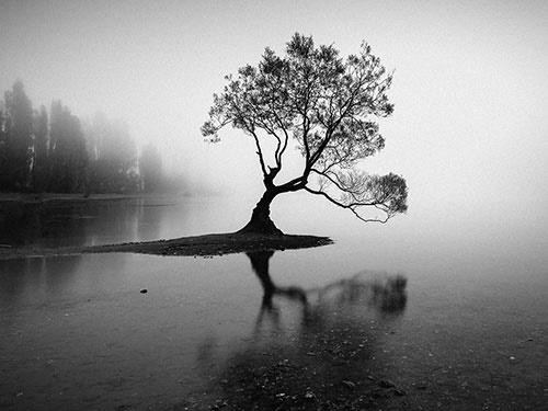 درخت تنهای مشهور نیوزیلند/عکس روز نشنال جئوگرافیک