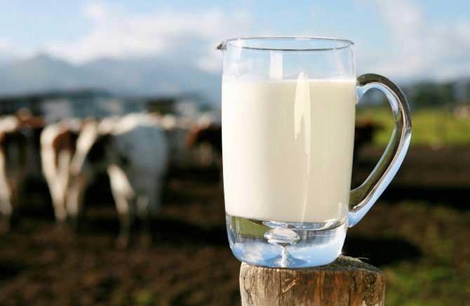 چرا مصرف شیر کاهش یافته است؟