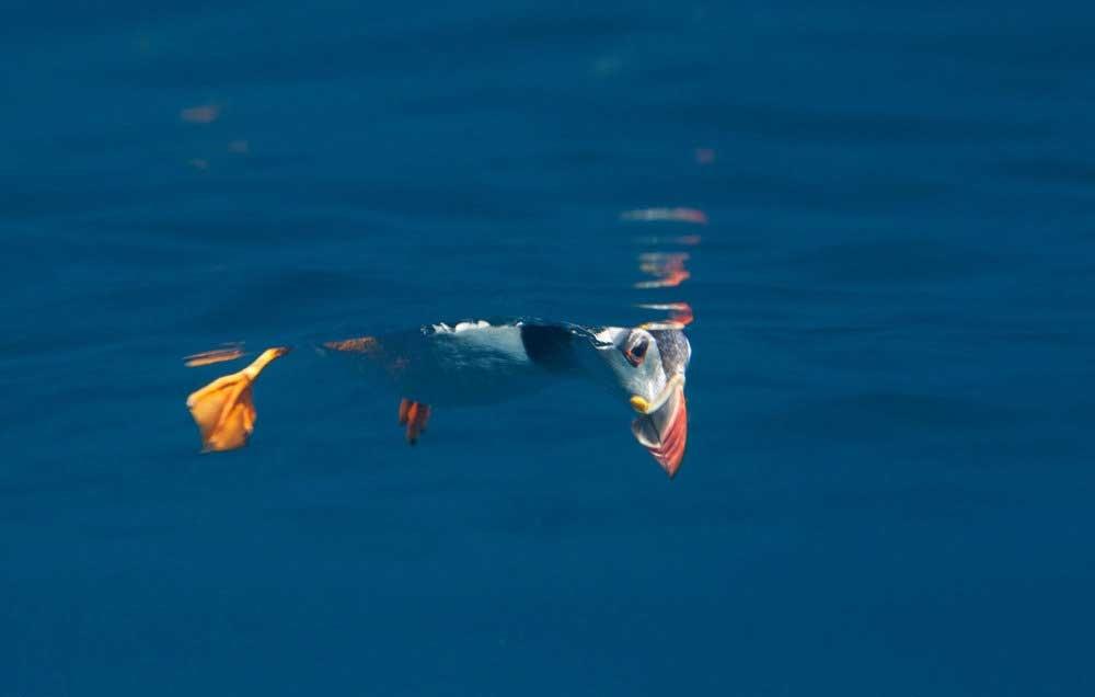 برندگان مسابقه عکاسی زیر آب