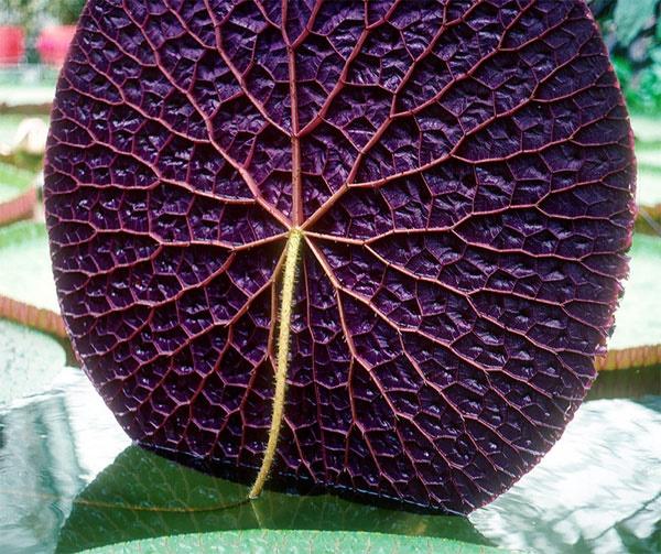 تصاویری از گیاهان هندسی
