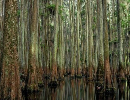 تصاویری دیدنی از دریاچه درخت