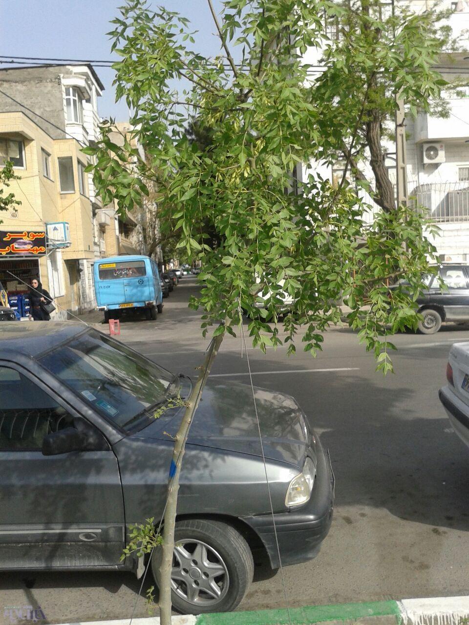 اعتراض به بستن درختان با مفتول آهنی/ مگر از ابتدای خلقت، درختان را با سیم بکسل بسته بودند؟