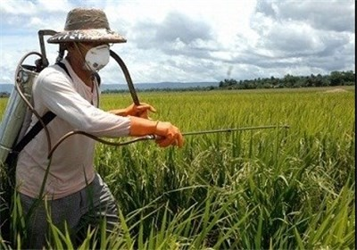 ۴۵ درصد فرصتهای شغلی اندیمشک در بخش کشاورزی