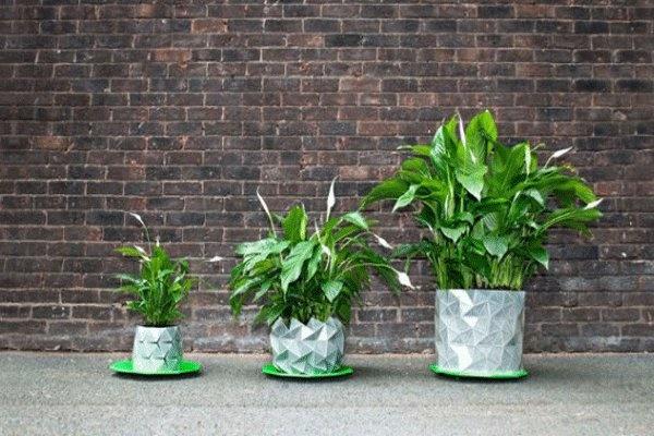 گلدانی که همراه با گیاه رشد میکند