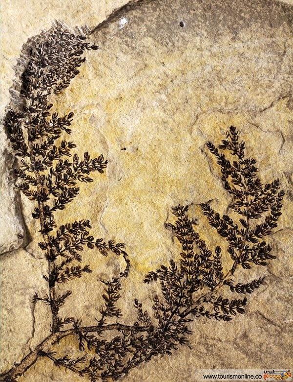 کشف قدیمی ترین گل دنیا!