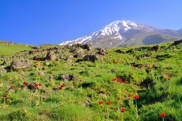 پیاده روی در دامنه سرسبز ایران