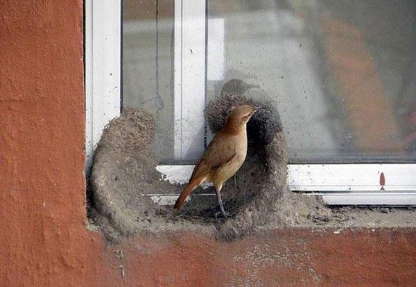 Image result for ?نمای ساختمان از دید پرنده?