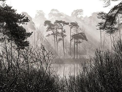 آفتاب سرد در یک جنگل/عکس روز نشنال جئوگرافیک