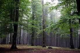 Hyrcanian Forest registered in World Heritage List