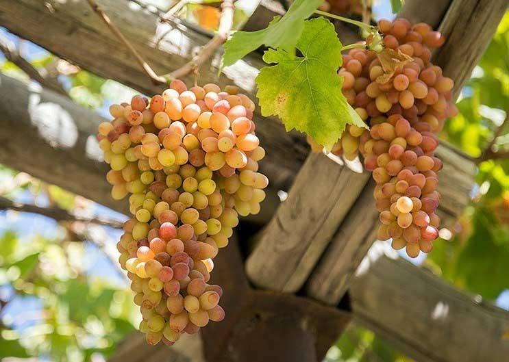 پیش بینی کاهش 30 درصدی تولیدات باغی استان در سال جاری