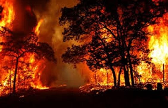 سوختن بیش از ۱۲ هزار هکتار جنگل و مرتع در آتش/ عامل انسانی؛ دلیل ۹۵درصد آتشسوزیها