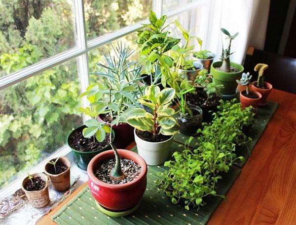 با چه گیاهانی هوای خانه و محل کارتان را تصفیه کنید؟/فهرست تحقیقات ناسا