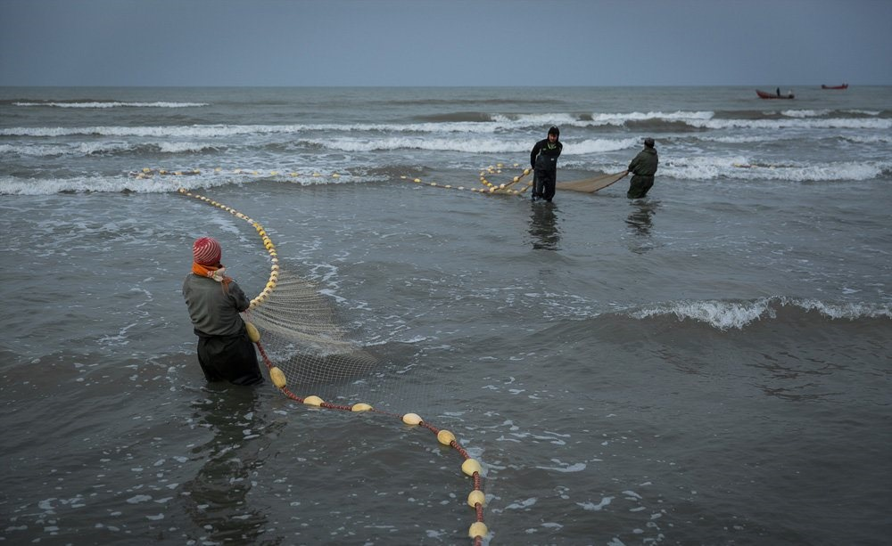 تصاویر   فصل ماهیگیری دریای خزر